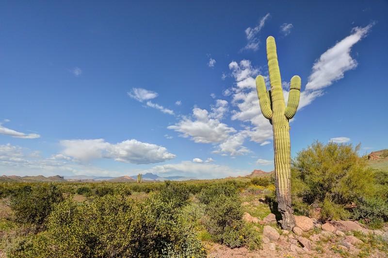 Saguaro and Clouds