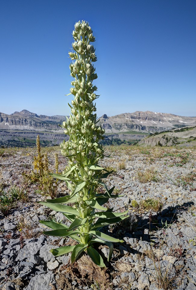 Lone Plant Near Hurricane Pass