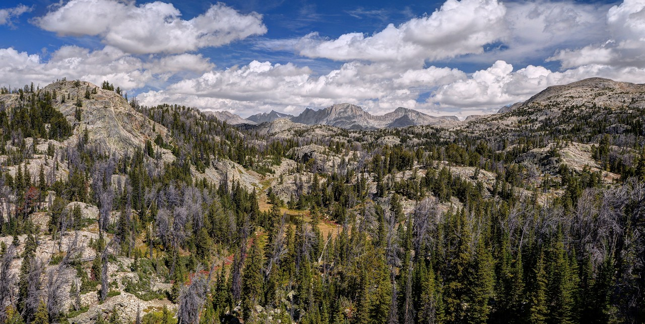 Bridger-Teton National Forest, Wyoming.<br /> Copyright © 2016<br /> All rights reserved.