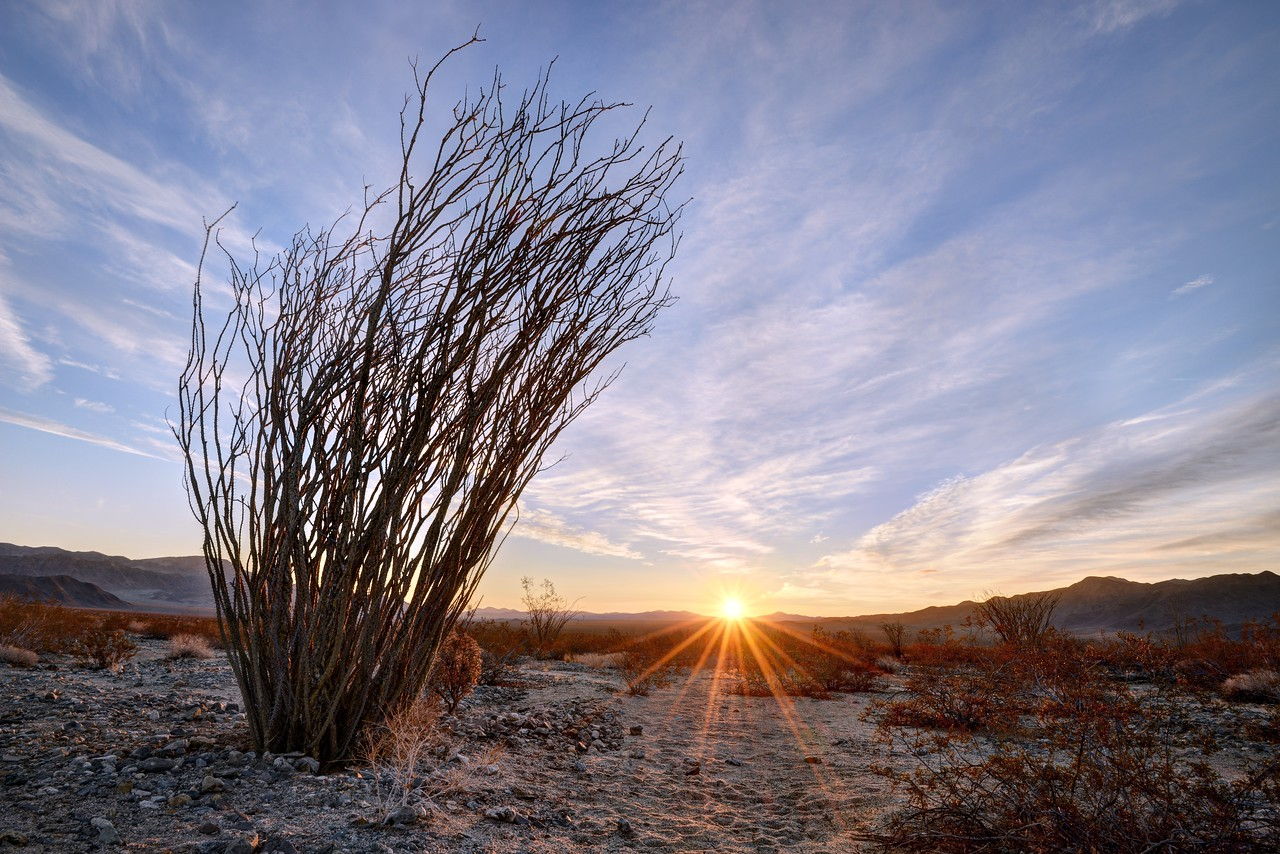 Sunrise in the Ocotillo Garden