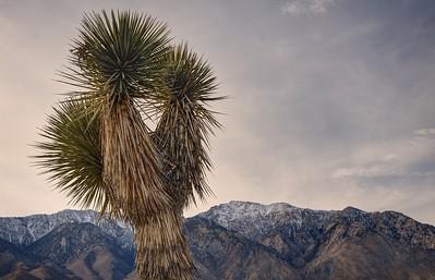 Joshua Tree and Olancha Peak