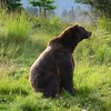 Alaska Wildlife Conservation Area near Anchorage, Alaska.<br /> Copyright © 2017 All rights reserved.