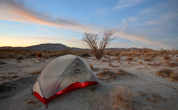Tent and Ocotillo