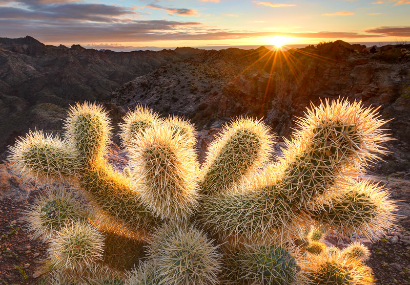 First Light on the Cholla