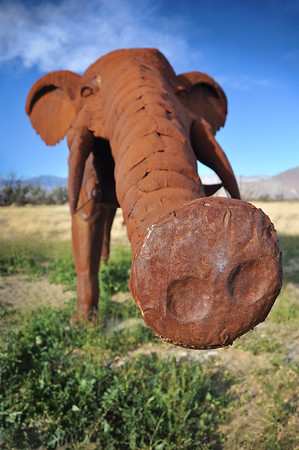 Elephant (Galleta Sculptures)  Anza-Borrego Desert, California.  Copyright © 2011 All rights reserved.