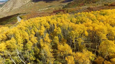 2-Manti LaSal mountain Fall foliage_01