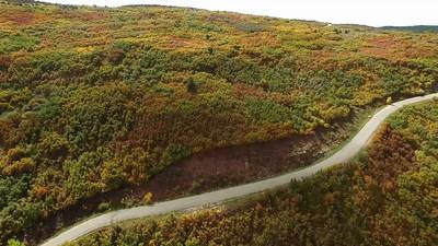 Fall foliage in the Mabti-LaSals 5