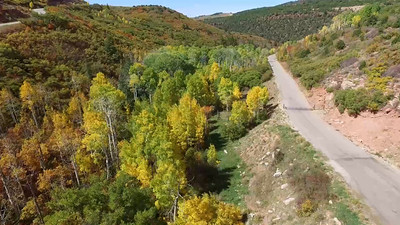 Fall foliage in the Mabti-LaSals 4