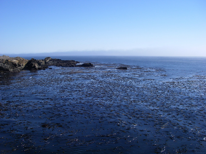 Huge fields of kelp filled every inlet.