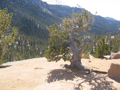 Gnarly bristlecone pines thrive in these harsh exposed conditions.