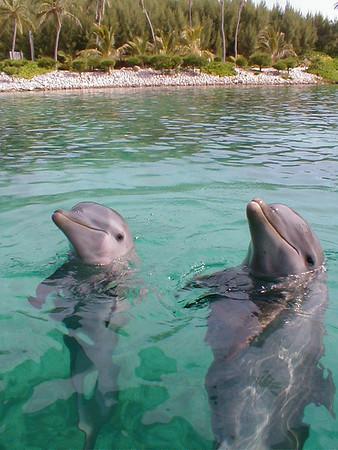 2002_08_24 Disney World FL, Atlantis Resort Bahamas, Blue Lagoon Bay Dolphins