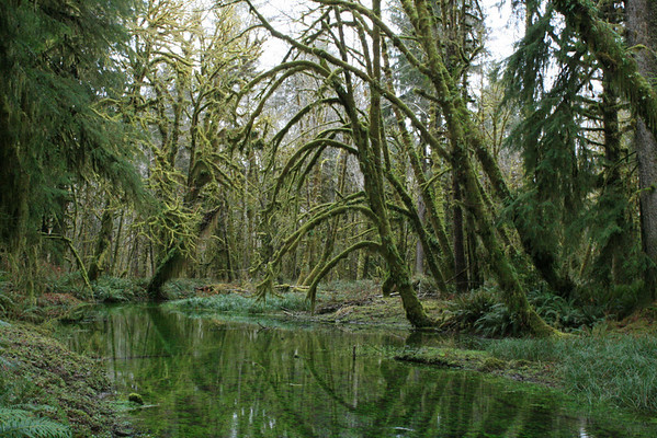 Quinault Rain Forest and Rialto Beach with Dave 1-31-11