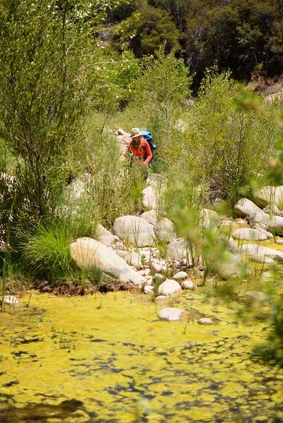 Sespe Creek Hike 021