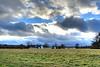 Caumsett State Park dairy farm, at sunset. December 2012.