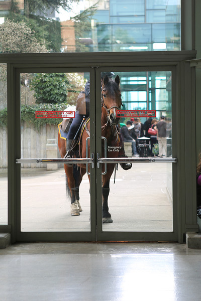 This pony wants to come in to Comicon