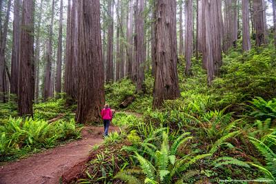 #27 - Redwoods NP, June