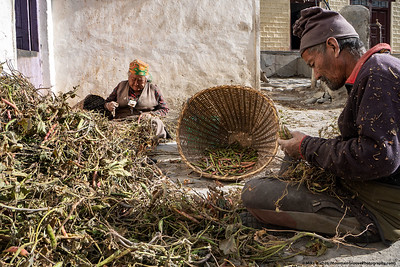 #41.  Backstory:  Two elders in the Nepal town of Kagbeni sort through the vines for beans.