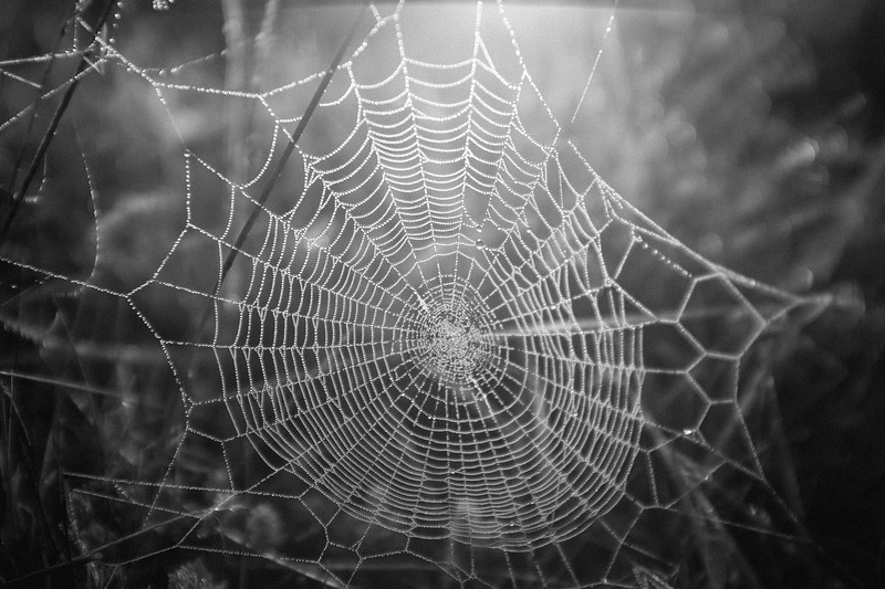 Tangled Web in the Morning
