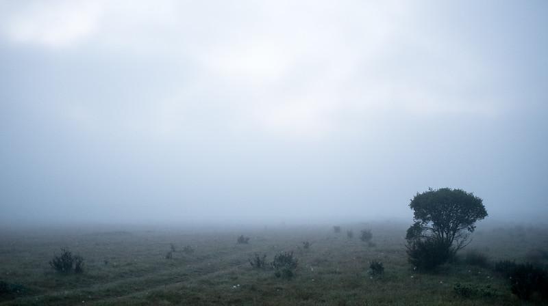 Foggy Morning, Gungarlin River