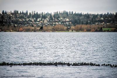 Ducks in a line!