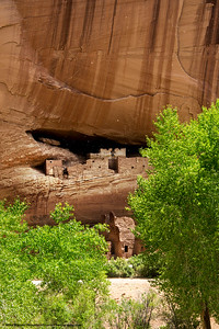 #41 - The white dots are cottonwood seeds.  Canyon de Chelly, June