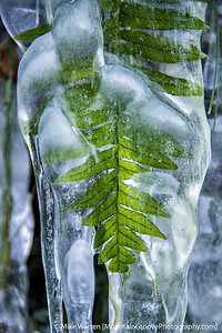 #22 - Ferns encased in ice, Columbia River Gorge.  Tripod, f/5.6, 1/50, ISO800, CPL