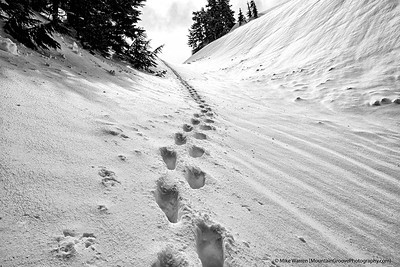 #9 - Stairway to the summit.  Taken on a spring ski tour in the Tatoosh range, these are the footprints of my ski partners.  I was working my butt off to keep up with the 30 somethings with which I was skiing!  Handheld, f/10, 1/1000, ISO200
