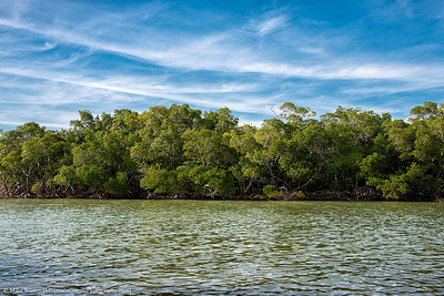 Jewell Key turned out to be mostly mangroves, with a sliver of sand!