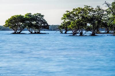 "Mangroves expanding the ""island."""