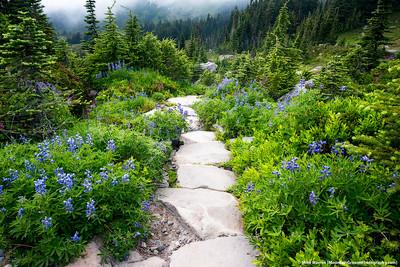 #17 - September, Wonderland Trail, MRNP