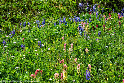 Wild flowers at Bird Creek Meadows