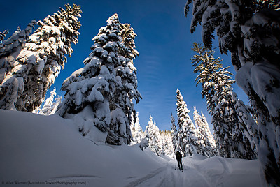 Skinning amongst the tall trees!