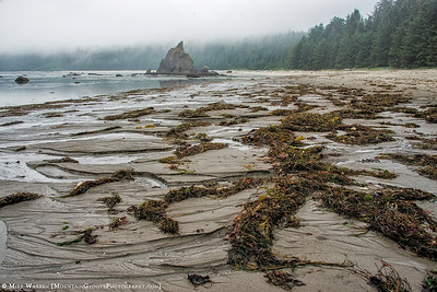 Early morning seaweed convention!