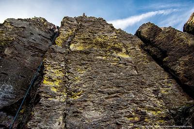Climbing legs!