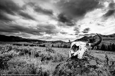 A buffalo skull, made famous by three photographers