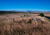 Monaro Tablelands, near Dalgety, NSW.