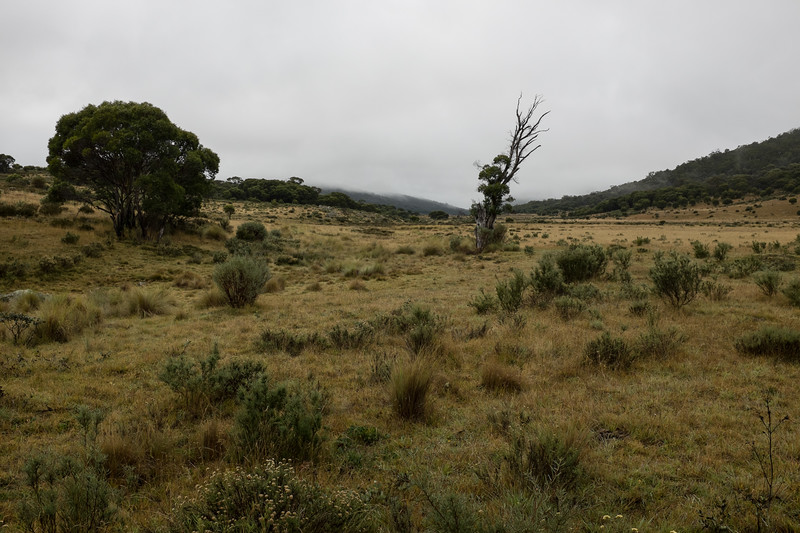 Autumn in the Gungarlin Valley