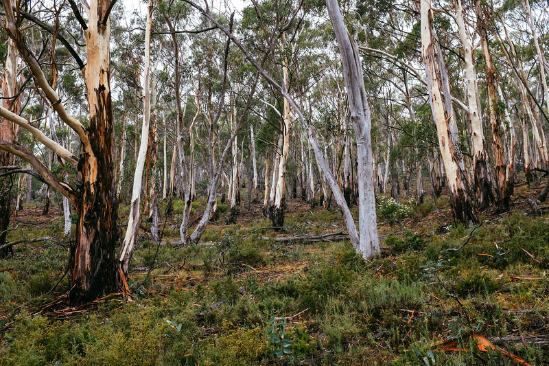 Forest, The Outpost, Murrumbidgee River