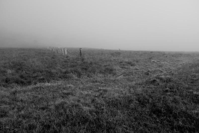 High Country Grasslands
