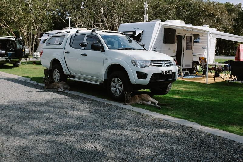 Just lounging around ..... Diamond Head Campground, Crowdy Bay National Park, NSW