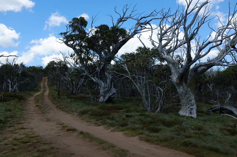 Davies High Plain, Alpine National Park, Victoria