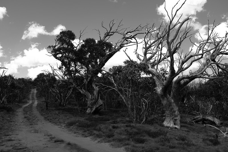 Davies High Plain, Alpine National Park, Victoria.