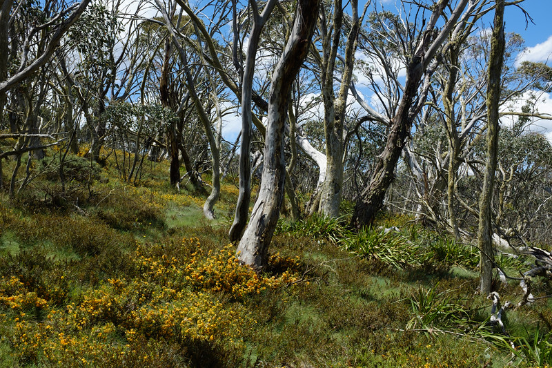 Davies High Plain, Alpine National Park, Victoria.