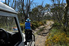Across the top, between Limestone Creek and Davies hut. Alpine National Park. Wildflowers ......