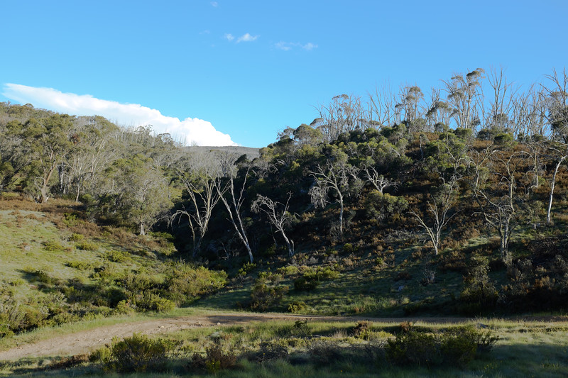 Davies Creek. Davies High Plain, Alpine National Park, Victoria. Jane made a painting of this scene and also took this photo.