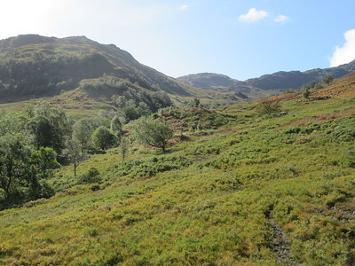 Looking up towards Ben Vorlich. Lots of nice native trees in this area.