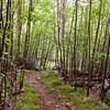 The trail down Bear Mountain