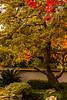 Autumnal Burst
