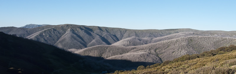 Bogong High Plains. The white trees are actually trees burnt in the 2003 fires.