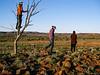 Tree, boy in tree, .. Mootwingee National park, near Broken Hill